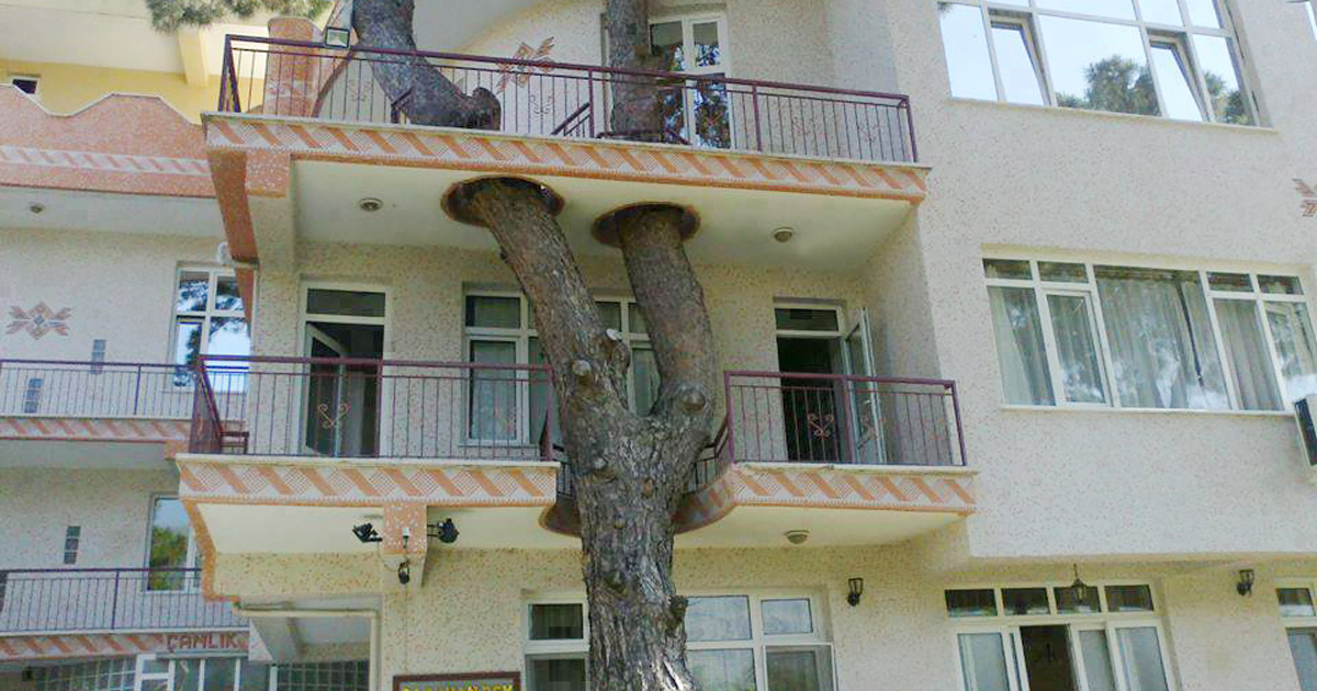 12 Architects Who Build Houses Around Trees Instead Of Cutting Them  DeMilked