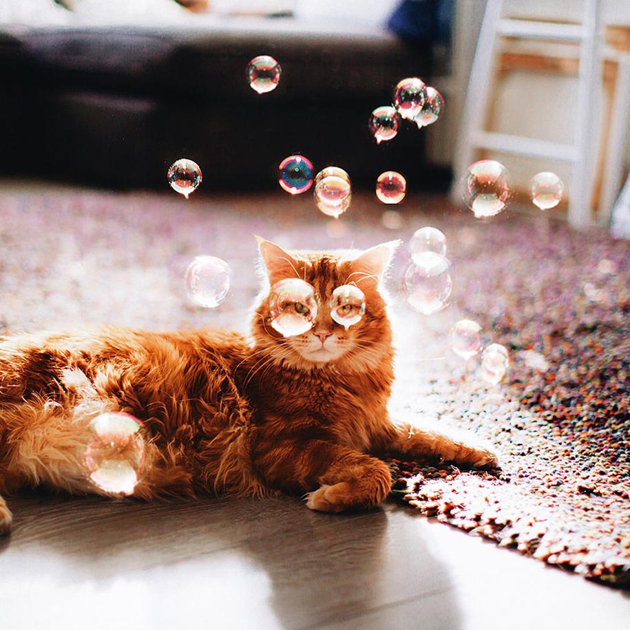 professional-cat-photography-kotleta-cutlet-kristina-makeeva-hobopeeba-15