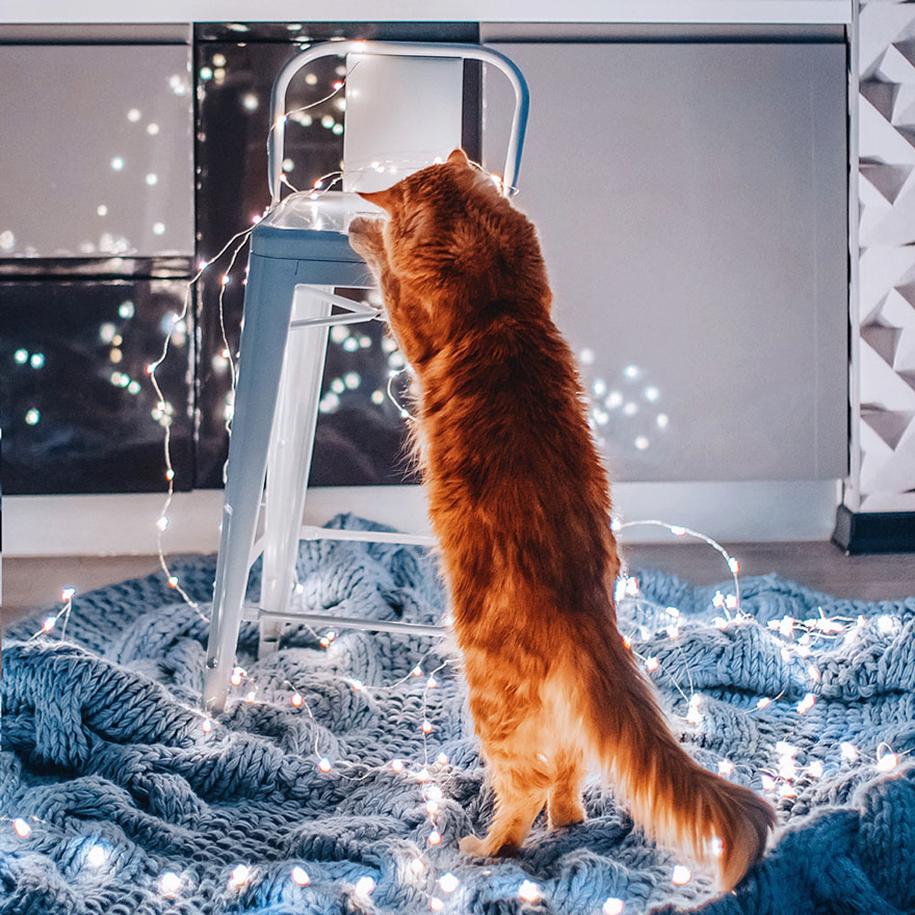 professional-cat-photography-kotleta-cutlet-kristina-makeeva-hobopeeba-2