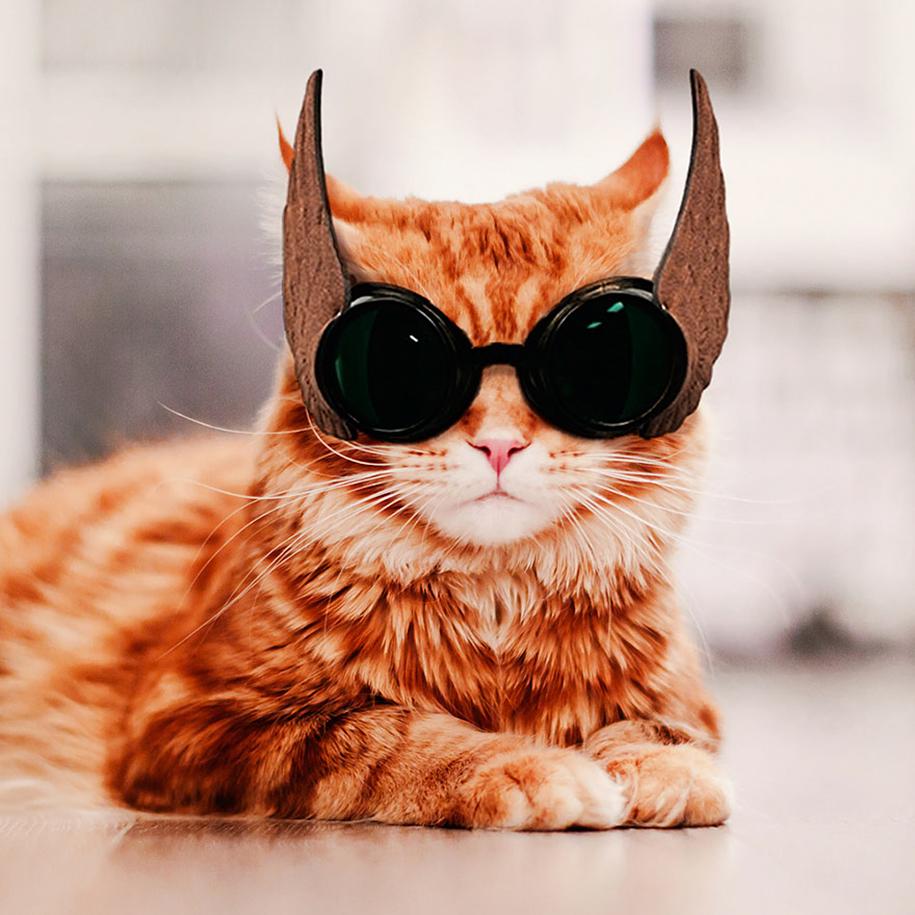 professional-cat-photography-kotleta-cutlet-kristina-makeeva-hobopeeba-20