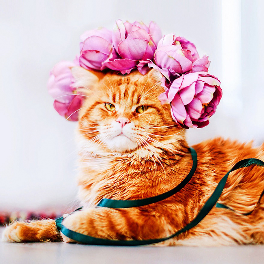 professional-cat-photography-kotleta-cutlet-kristina-makeeva-hobopeeba-24