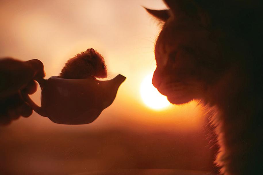 professional-cat-photography-kotleta-cutlet-kristina-makeeva-hobopeeba-6