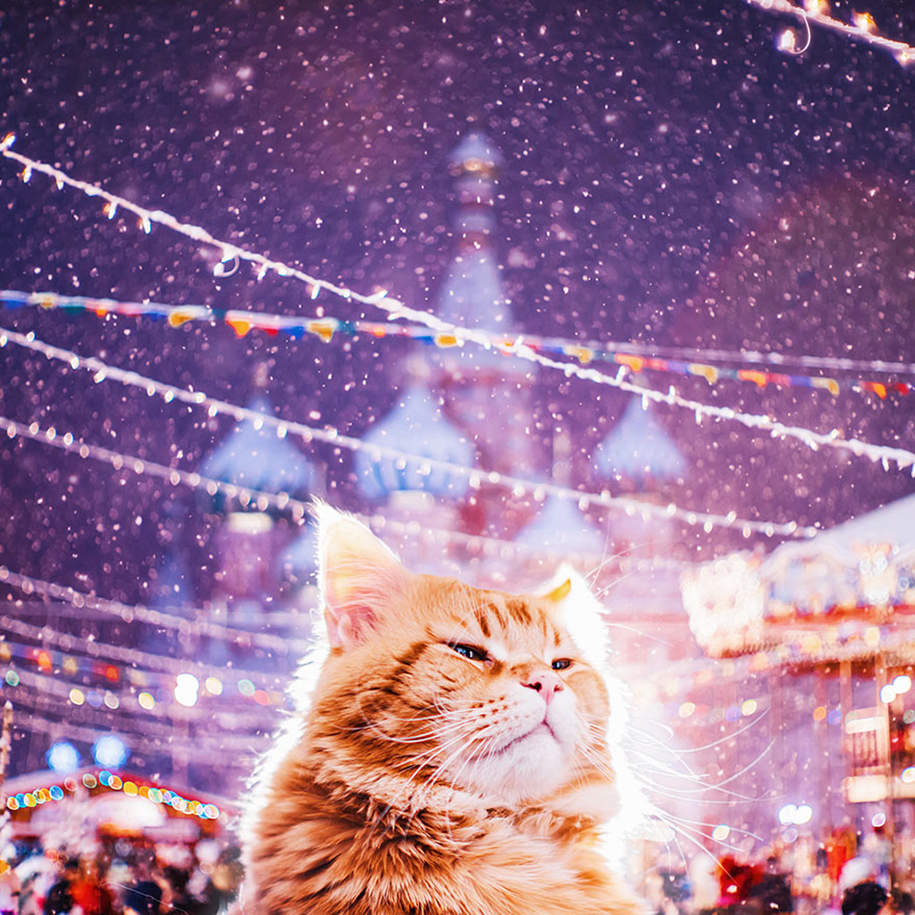 professional-cat-photography-kotleta-cutlet-kristina-makeeva-hobopeeba-9