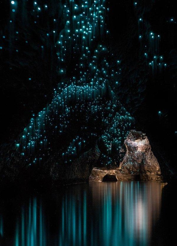 New Zealand Cave Glow Worm