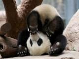 Bored Panda Demilked