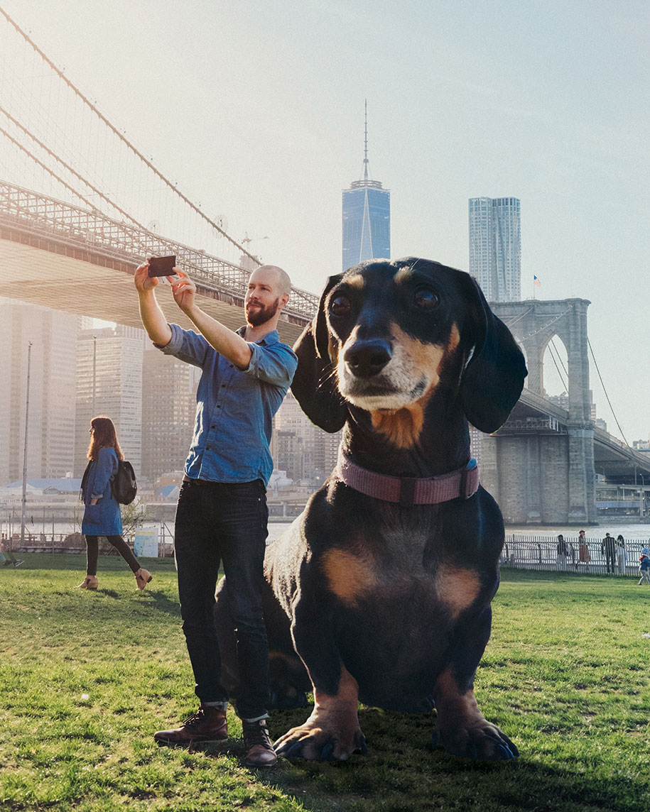 Photographer Makes His Wiener Dog As Big As She Thinks She Is