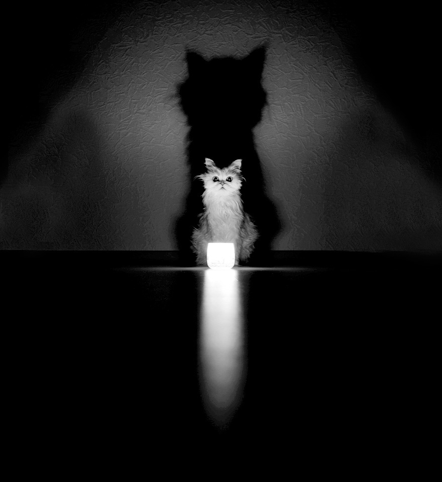 Black  White Photos Reveal The Mysterious Lives Of Cats