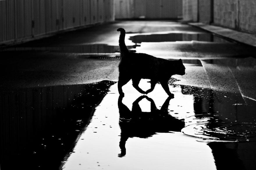 black white photos reveal