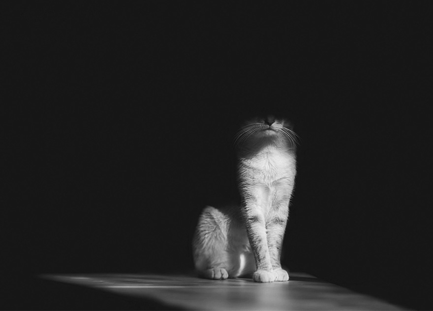mysterious-cats-black-and-white-portraits-8