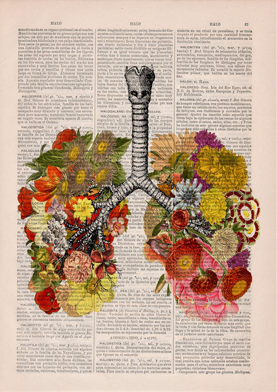 How To Fix Falling Wallpaper Floral Anatomy Illustrations On The Pages Of Old Books