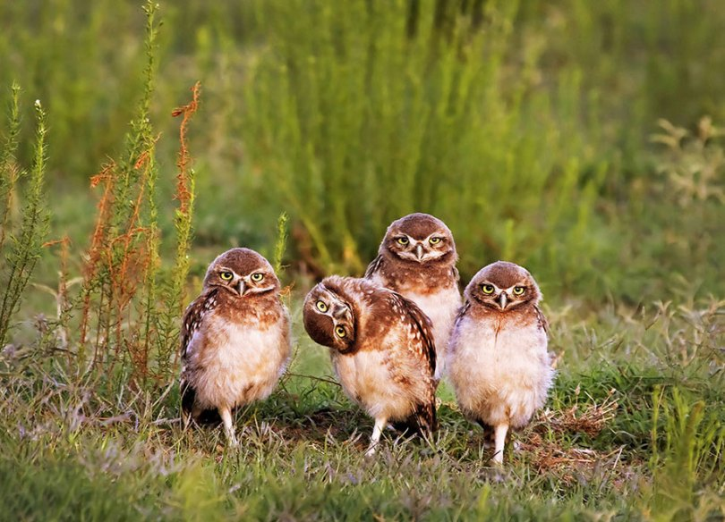 comedy wildlife photography awards best photos 2016 15 - As fotos profissionais mais engraçados do mundo animal (Parte 2)
