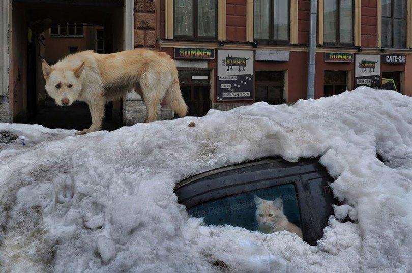 russia photos alexander petrosyan 5 - 50 fotos brutalmente honestas da Rússia mostram que não há outro país como ele