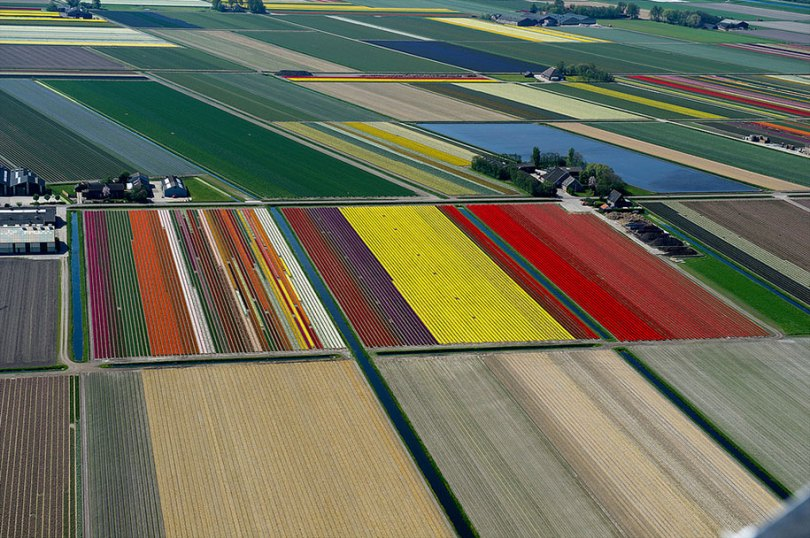 flower fields aerial photography netherlands normann szkop 21 - Show de cores nas fotos aéreas de tulipas holandesas
