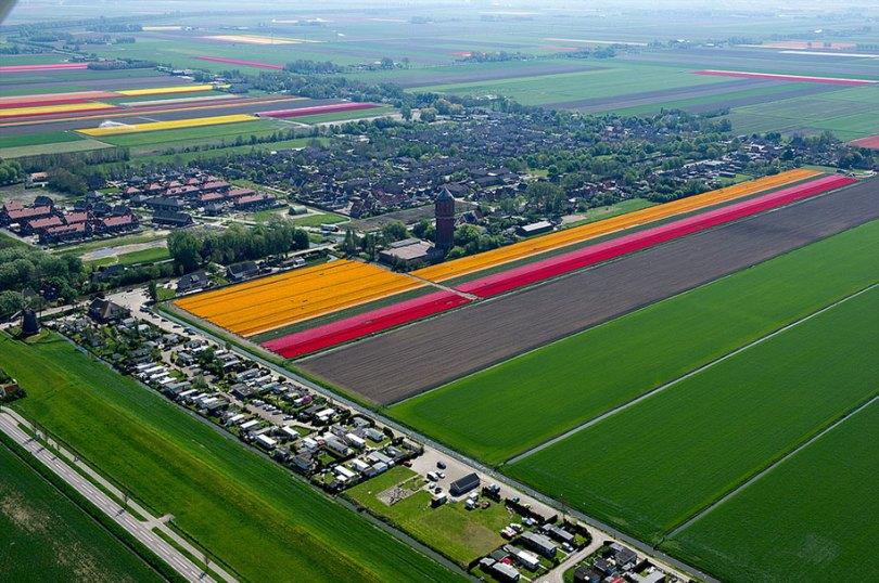 flower fields aerial photography netherlands normann szkop 27 - Show de cores nas fotos aéreas de tulipas holandesas