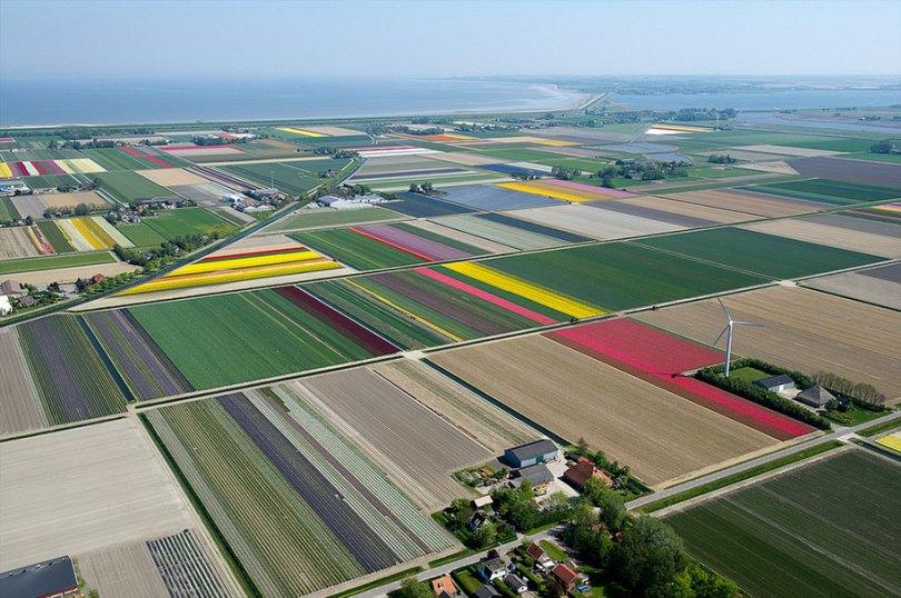 flower fields aerial photography netherlands normann szkop 400 - Show de cores nas fotos aéreas de tulipas holandesas