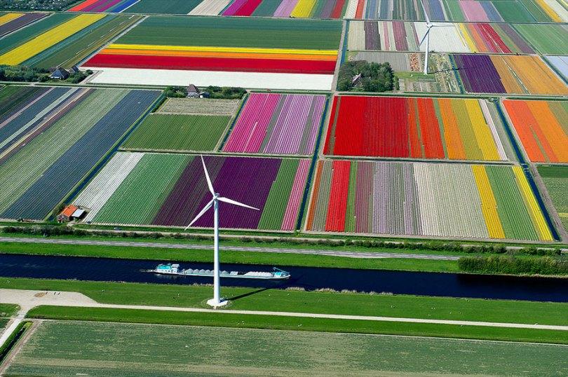 flower fields aerial photography netherlands normann szkop 53 - Show de cores nas fotos aéreas de tulipas holandesas