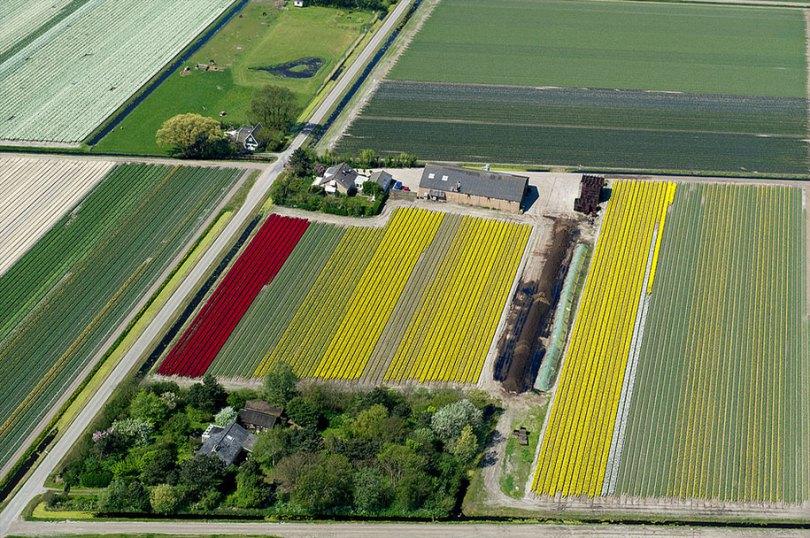 flower fields aerial photography netherlands normann szkop 59 - Show de cores nas fotos aéreas de tulipas holandesas