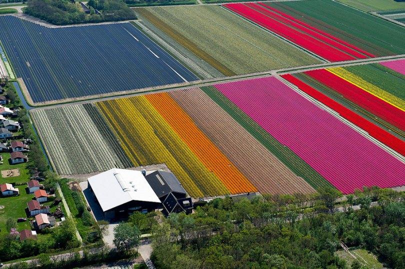 flower fields aerial photography netherlands normann szkop 6 - Show de cores nas fotos aéreas de tulipas holandesas