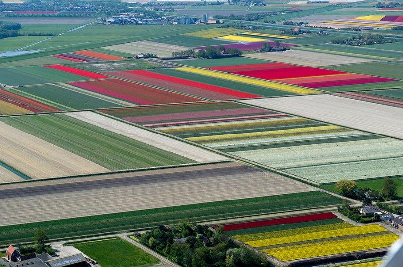 flower fields aerial photography netherlands normann szkop 60 - Show de cores nas fotos aéreas de tulipas holandesas