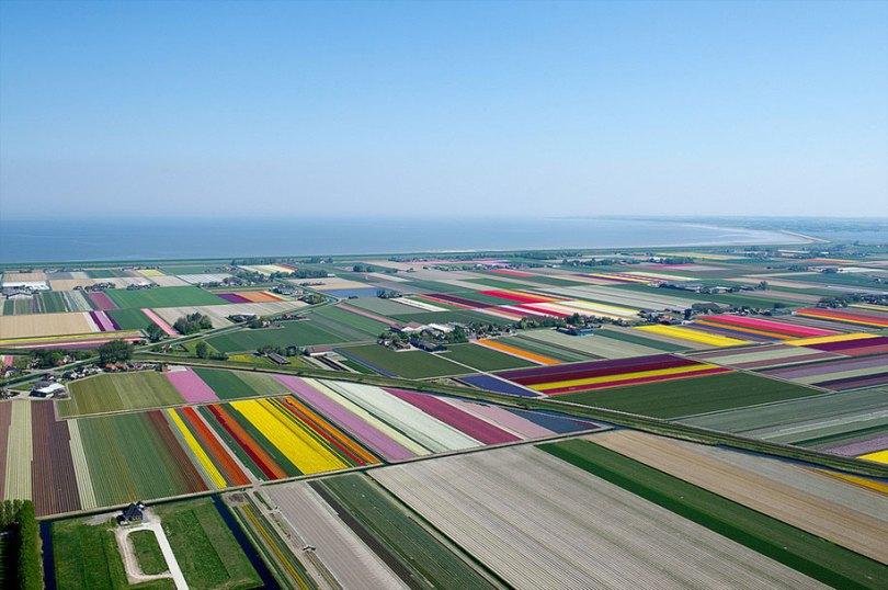 flower fields aerial photography netherlands normann szkop 62 - Show de cores nas fotos aéreas de tulipas holandesas