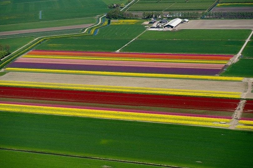 flower fields aerial photography netherlands normann szkop 74 - Show de cores nas fotos aéreas de tulipas holandesas