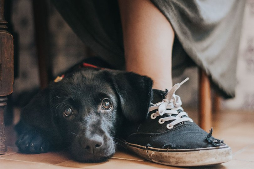 kennel club dog photographer competition 2017 1 - Ganhadores do concurso fotografias de cachorrinhos