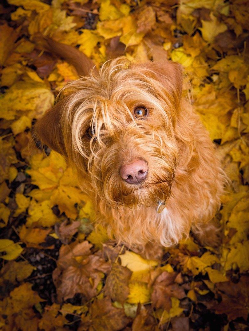 kennel club dog photographer competition 2017 13 - Ganhadores do concurso fotografias de cachorrinhos