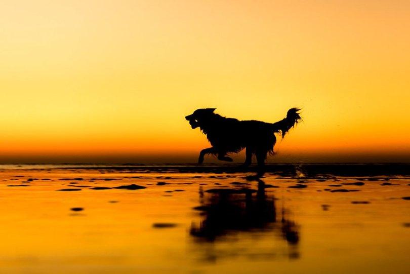 kennel club dog photographer competition 2017 17 - Ganhadores do concurso fotografias de cachorrinhos