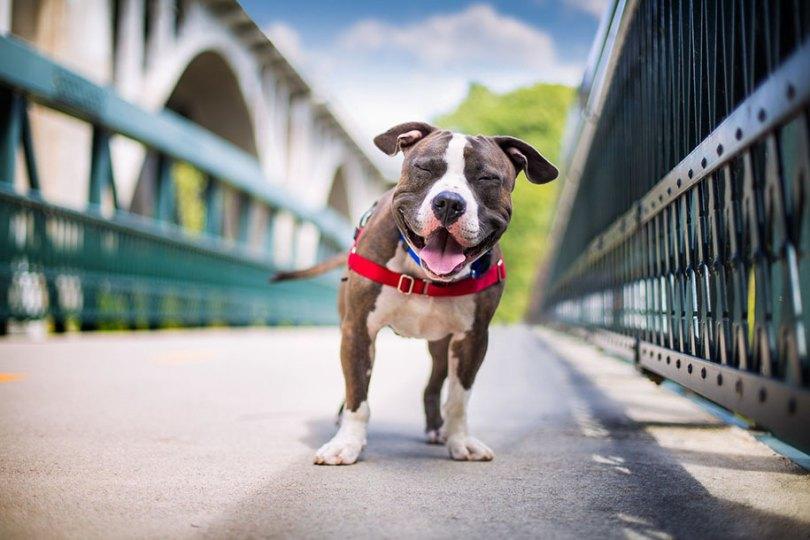 kennel club dog photographer competition 2017 2 - Ganhadores do concurso fotografias de cachorrinhos