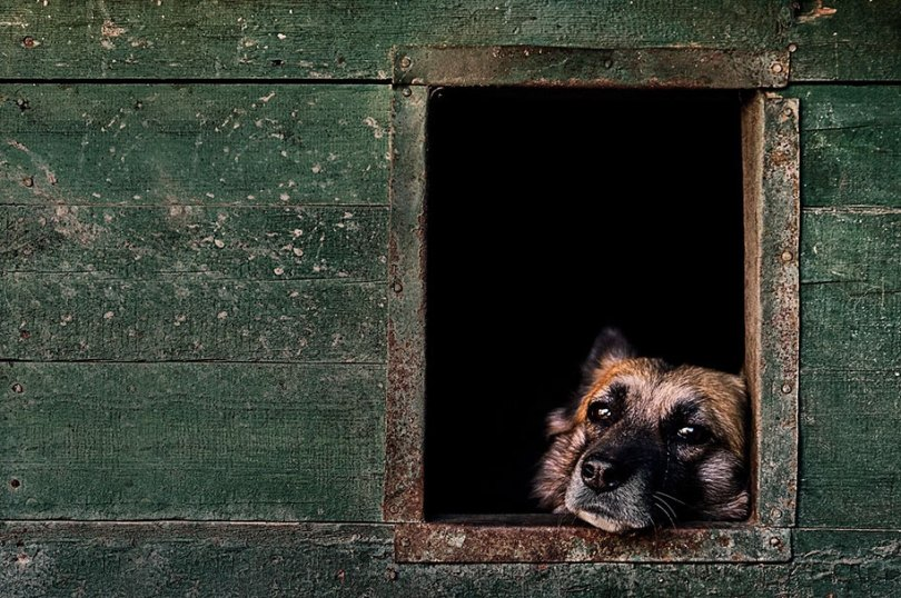kennel club dog photographer competition 2017 24 - Ganhadores do concurso fotografias de cachorrinhos