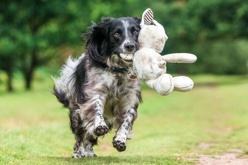 kennel club dog photographer competition 2017 25 - Ganhadores do concurso fotografias de cachorrinhos