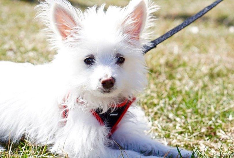 fotos de cachorrinhos