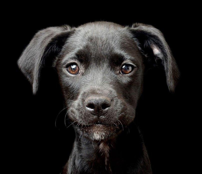 kennel club dog photographer competition 2017 5 - Ganhadores do concurso fotografias de cachorrinhos