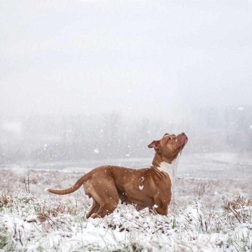 14 2 915x915 - Fotógrafa tira fotos de cães abandonados em abrigo