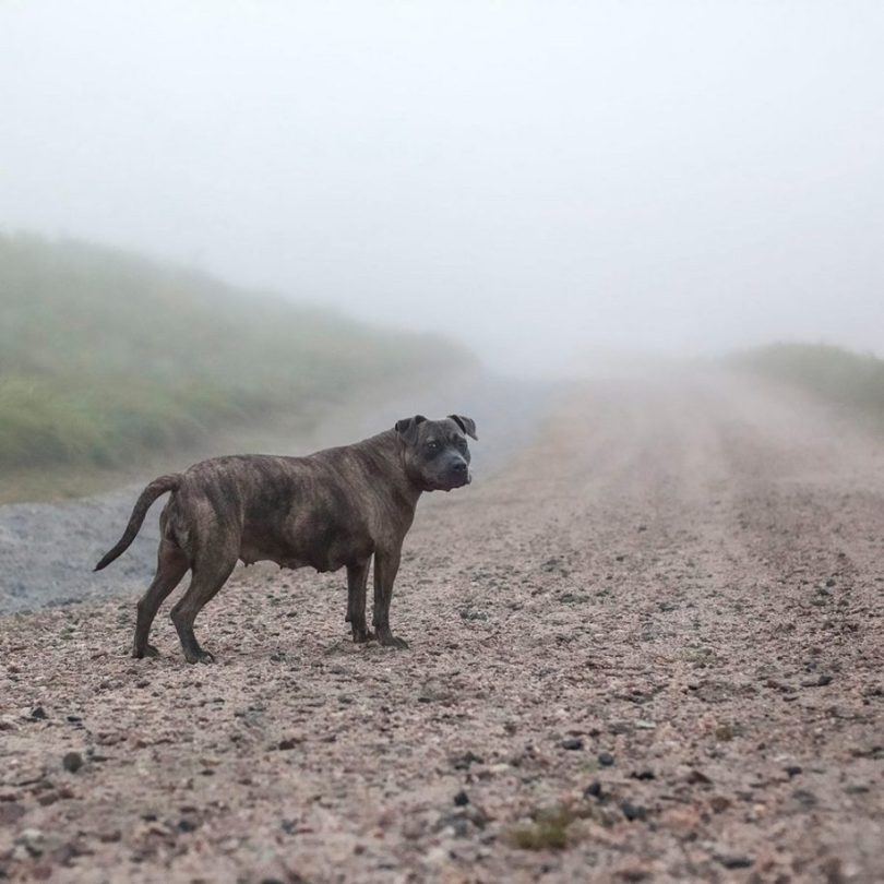 16 1 915x915 - Fotógrafa tira fotos de cães abandonados em abrigo