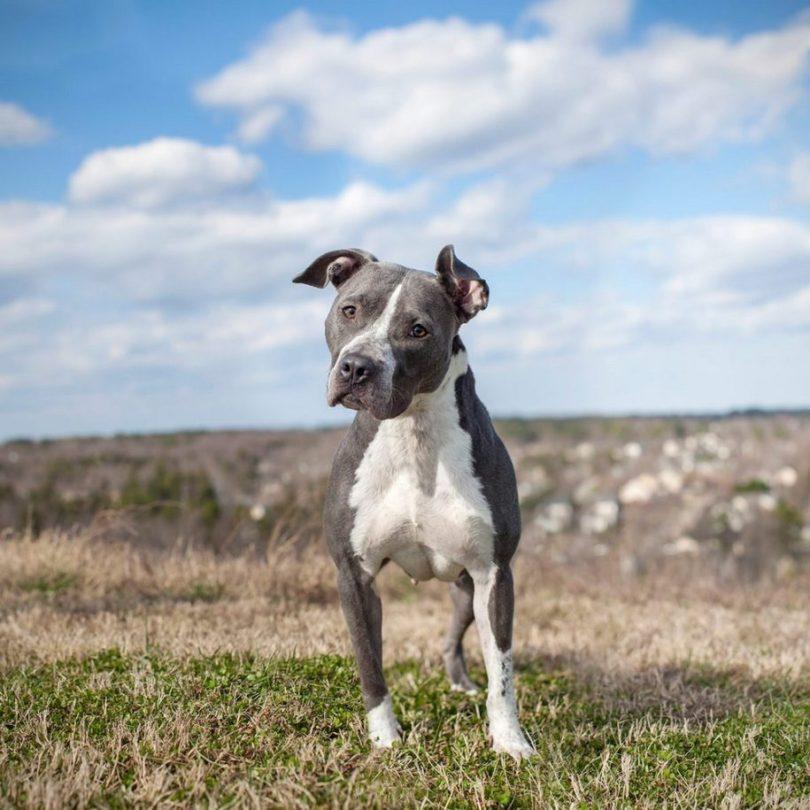 17 915x915 - Fotógrafa tira fotos de cães abandonados em abrigo