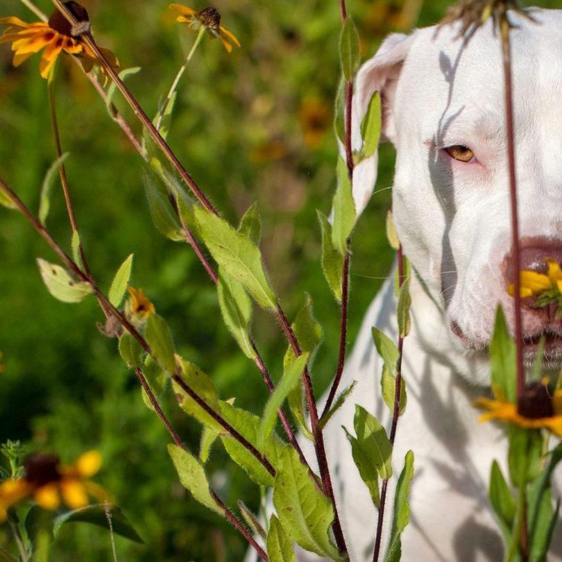 Fotos, Curiosidades, Comunicação, Jornalismo, Marketing, Propaganda, Mídia Interessante 18-915x915 Fotógrafa tira fotos de cães abandonados em abrigo Cotidiano Fotos e fatos  cães abandonados