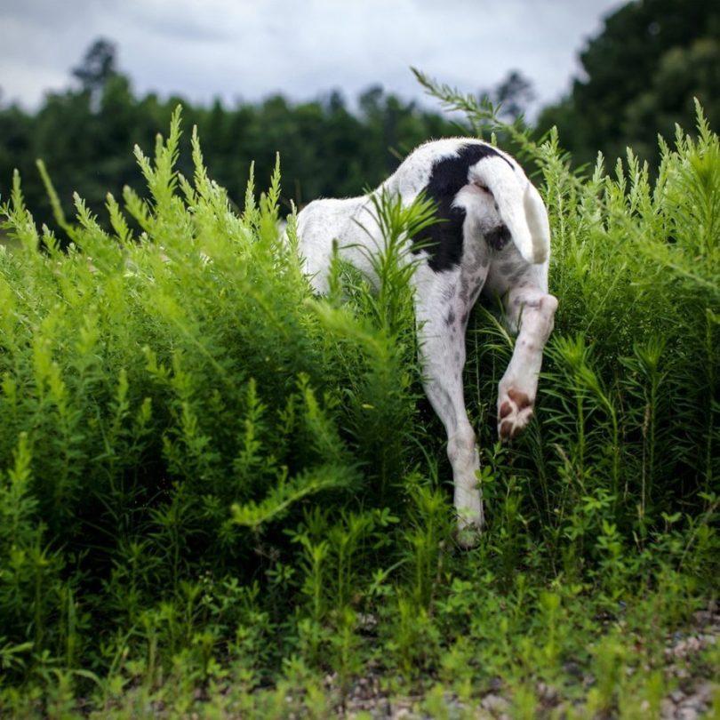 19 915x915 - Fotógrafa tira fotos de cães abandonados em abrigo