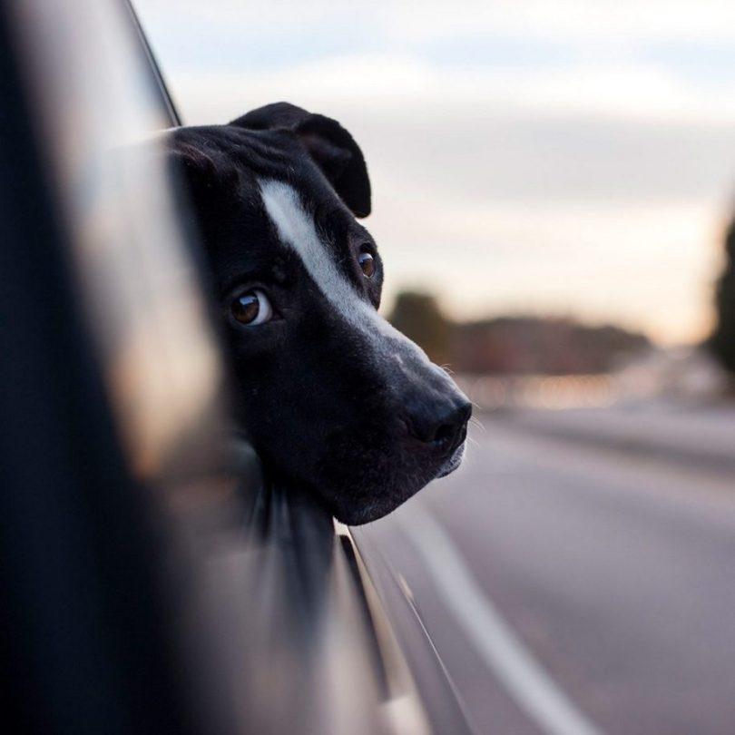 Fotos, Curiosidades, Comunicação, Jornalismo, Marketing, Propaganda, Mídia Interessante 4-2-915x915 Fotógrafa tira fotos de cães abandonados em abrigo Cotidiano Fotos e fatos  cães abandonados