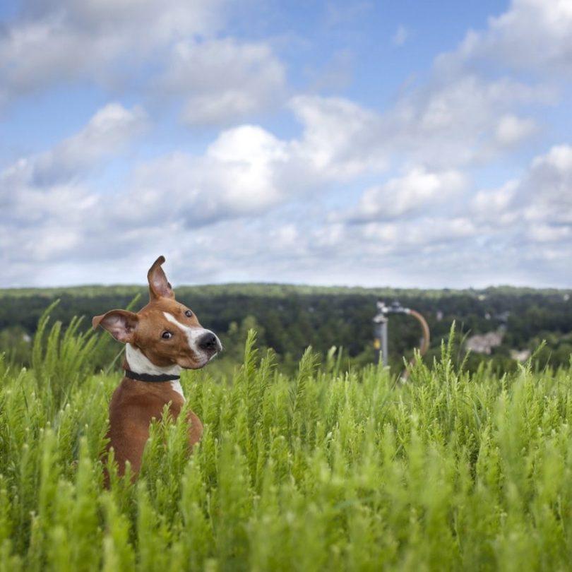 6 2 915x915 - Fotógrafa tira fotos de cães abandonados em abrigo