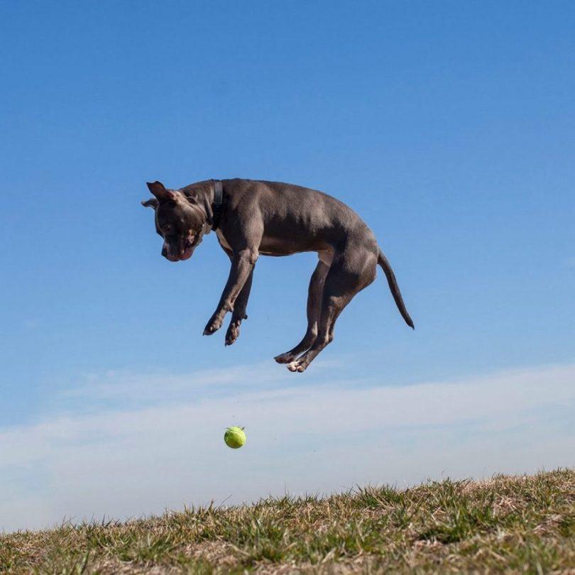 8 2 915x915 - Fotógrafa tira fotos de cães abandonados em abrigo