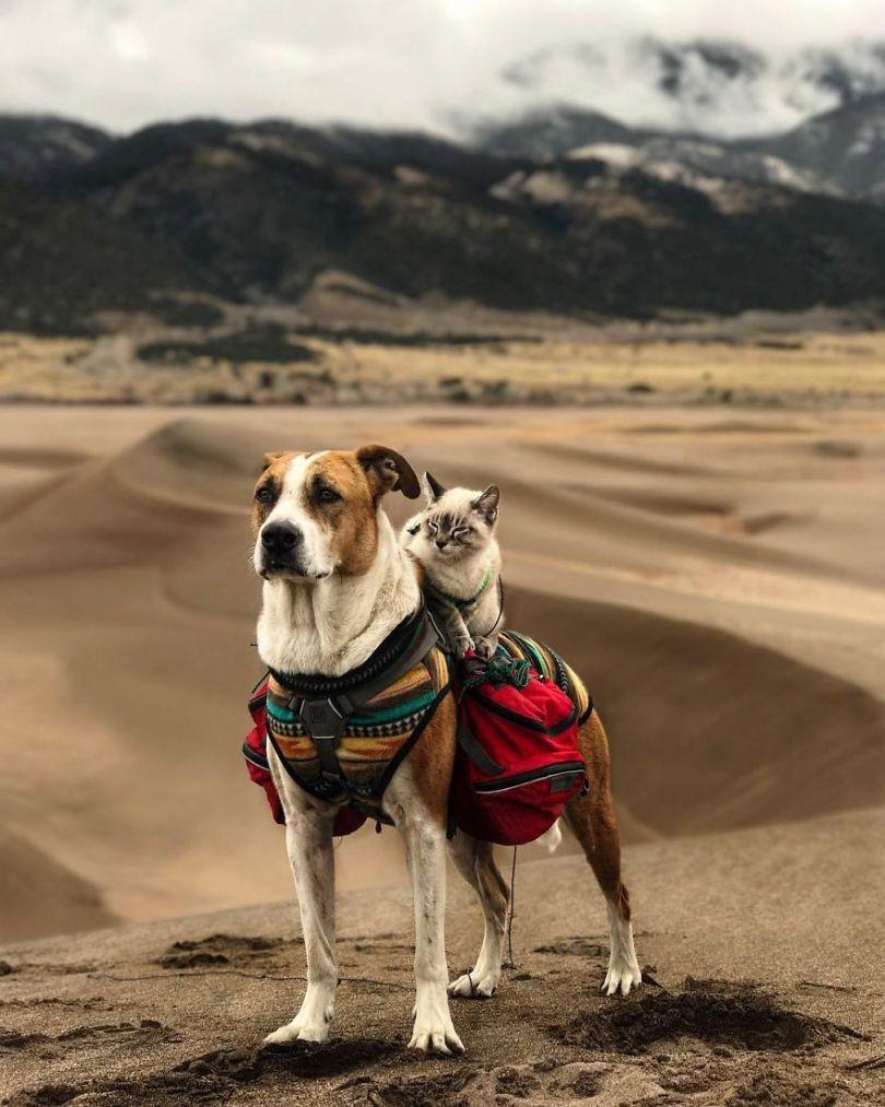 5a1bc7a61aa64 6 5a1845ea4d2c3  880 - Como cão e gato - Esses amigos são inseparáveis
