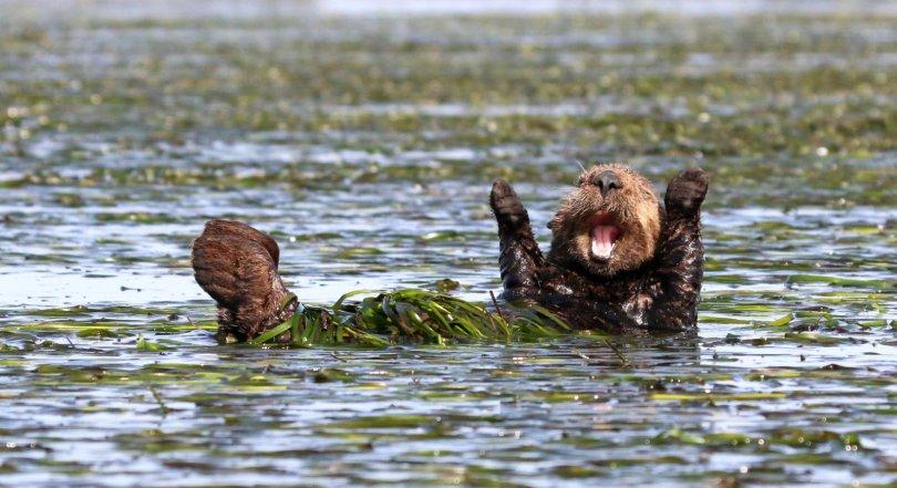 00000219 p - As fotografias profissionais mais engraçadas do mundo animal
