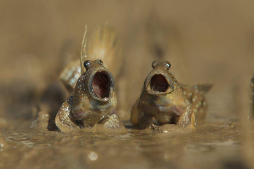 00000224 p - As fotografias profissionais mais engraçadas do mundo animal
