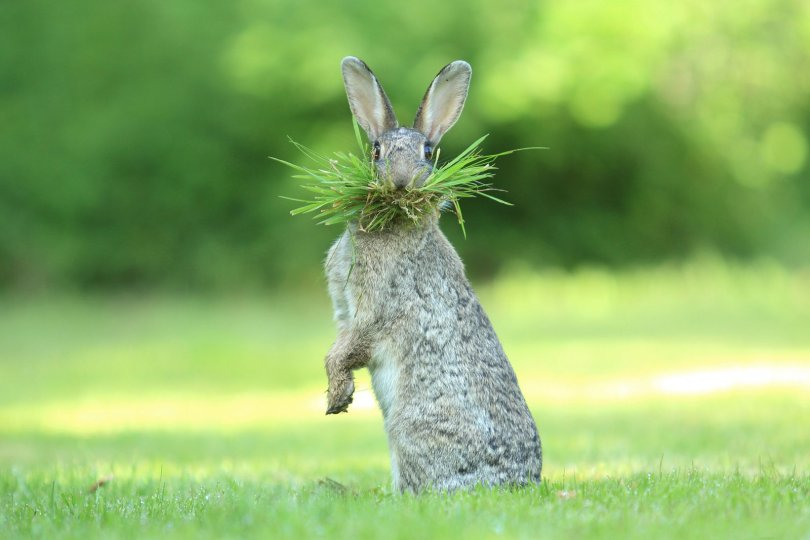 00000230 p - As fotografias profissionais mais engraçadas do mundo animal