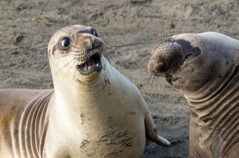 00000231 p - As fotografias profissionais mais engraçadas do mundo animal
