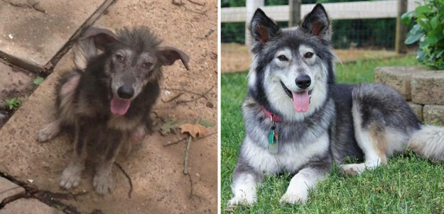5a9682bc4ed50-happy-dogs-before-after-adoption-33-5a95366e6962d__880 50+ Photos Show Dogs Before & After Their Adoption, And It's Hard To Believe They Are The Same Dogs Random
