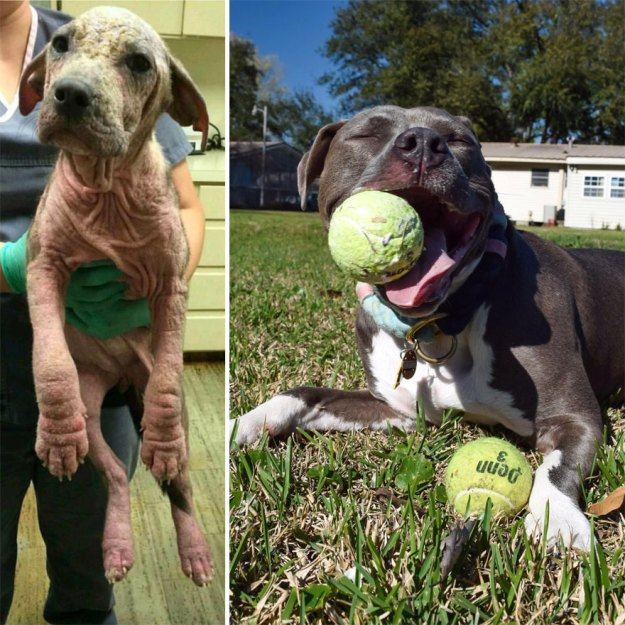 5a9682bebfb66-happy-dogs-before-after-adoption-72-5a9532165f31e__880 50+ Photos Show Dogs Before & After Their Adoption, And It's Hard To Believe They Are The Same Dogs Random