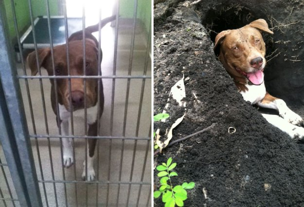 5a9682ce880b1-happy-dogs-before-after-adoption-43-5a951e5486169__880 50+ Photos Show Dogs Before & After Their Adoption, And It's Hard To Believe They Are The Same Dogs Random