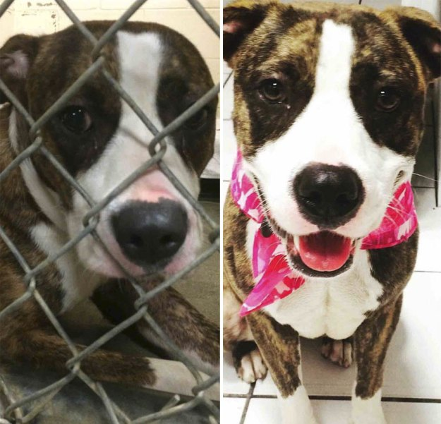 5a9682d3028c6-happy-dogs-before-after-adoption-5a950e75edf9c__880 50+ Photos Show Dogs Before & After Their Adoption, And It's Hard To Believe They Are The Same Dogs Random